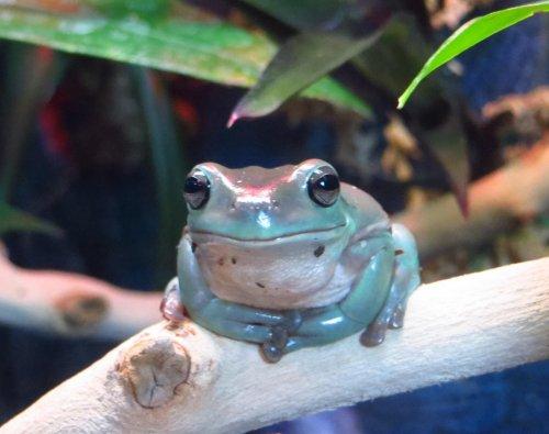 Frogs_2.jpg