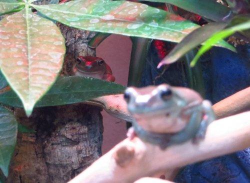 Frogs_3.jpg