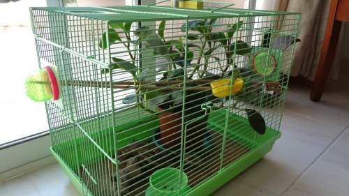 Chams's Cage.jpg