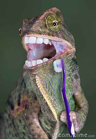 chameleon-brushing-teeth-4783076.jpg