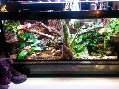 Reptisun Led Uvb Terrarium Hood Chameleon Forums