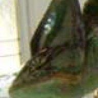 Chameleons Northwest