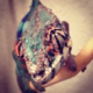 ChameleonRave