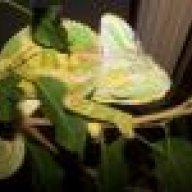 Oh Craigslist      | Chameleon Forums