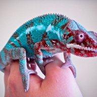 Reptilelover47