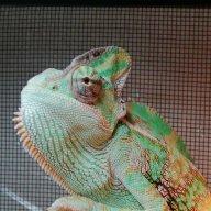 ChameleonNate