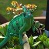 Pistachiochameleon