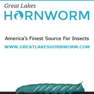 Great Lakes Hornworm