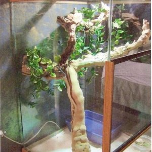 This is Delana's iguana condo.  Thanks to this cage, my little sweetheart is growing like a weed.