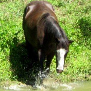 my horsey :)
