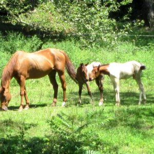 a horse with a foal baby sitting another horses foal