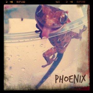Phoenix Edit