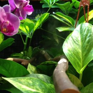 Inside the cage: Pothos and a moth orchid. You can see some fog rolling in in the background.