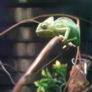 My handsome boy Chomper