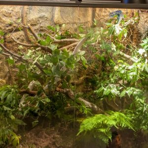 My terrarium, exo terra 90x45x90 glass, bioactive with alive plants in its old state. By now its re-designed