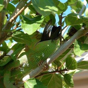 Poor Hummingbird