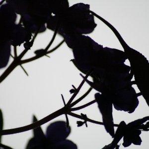 sun downer