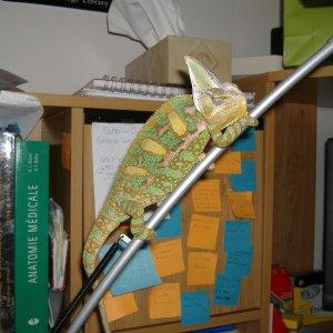Lenny on a desk lamp