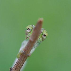 All Eyes!