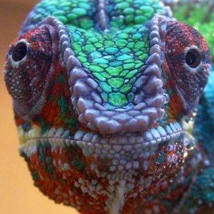 Mclovin's Close Up
