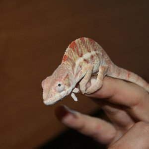 Sancho At 4 Months