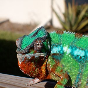 Salvador In The Florida Sun