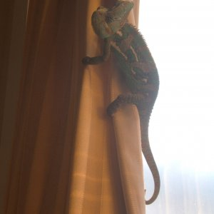 Hangin On The Curtain