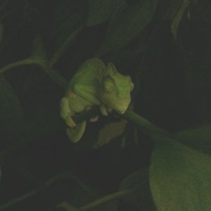Sleep In The Mysterious Pothos
