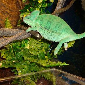 Yoshi Just Hanging :-p
