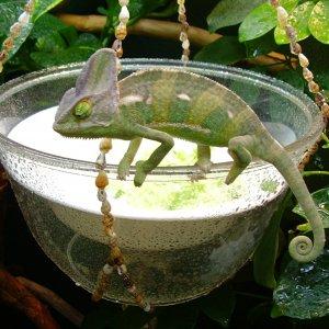My Saladbowl, My Territory!