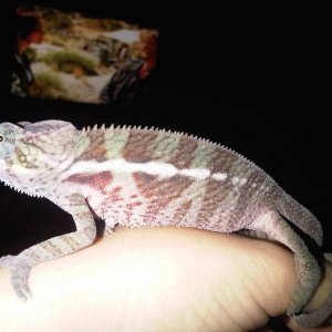 9/29/2010 After His 1st Shed With Me