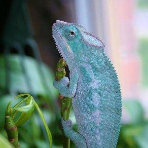 My Blue Boy