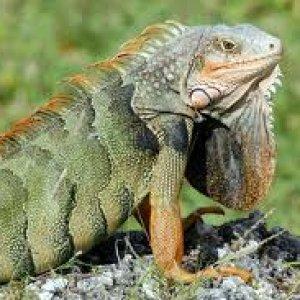 I Like Reptiles!