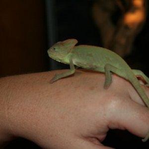 Kimani At 2 1/2 Months