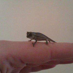 Percy The Pygmy