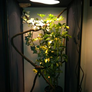 My Enclosure