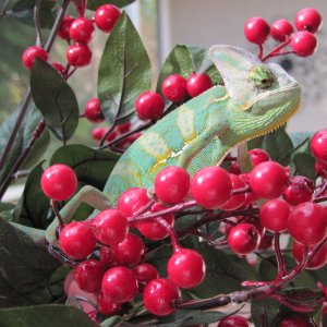 Have A Berry Nice Holiday Season!