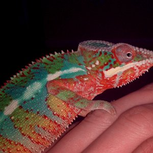 Chameleontb83's Panther Cham Crayon 1