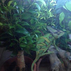 Gringo's New Plant