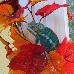 Happy Fall Yall!
