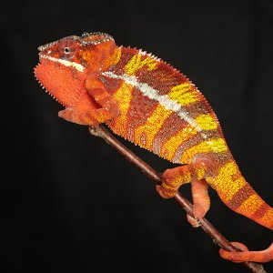 Hot Colors