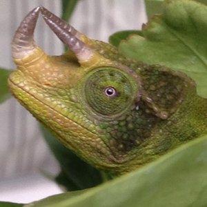 Upward Horn