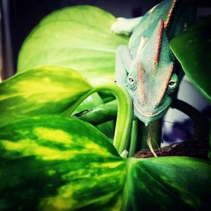 Colin On His New Plant