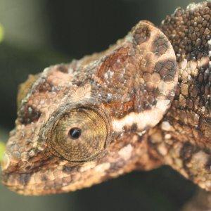 Werneri Occipital Lobe Close Up