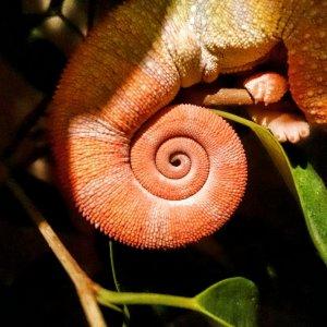 Alduin's tail
