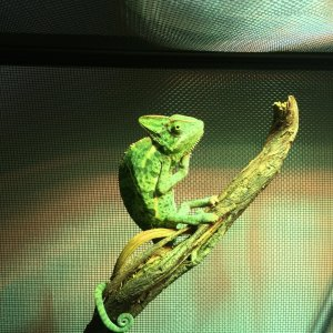 Basking? You are doing it right!