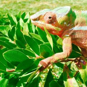Jukka enjoying the sun