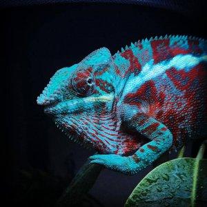 Male Ambanja