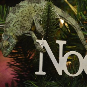 chameleon on Noel ornament