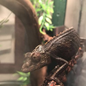dark female jackson
